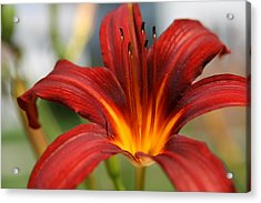 Acrylic Print featuring the photograph Sunburst Lily by Neal Eslinger