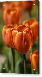 Sunburst Tulips Acrylic Print by Julie Palencia