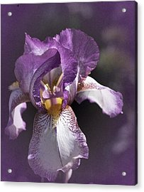 Sunday Iris No. 1 Acrylic Print