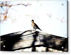 Acrylic Print featuring the photograph Sunday Morning  by Jessica Shelton
