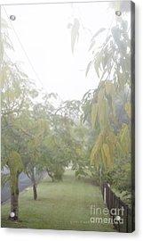 Acrylic Print featuring the photograph Sunday Street Fog by Vicki Ferrari