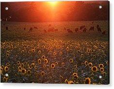 Sundown On Buttonwood Farm Acrylic Print by Andrea Galiffi