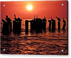 Sundown With Pelicans Acrylic Print