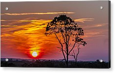 Sundown With Tree Acrylic Print
