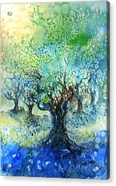 Sundrenched Olive Grove   Acrylic Print by Trudi Doyle