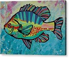 Sunfish Acrylic Print by Krista Ouellette