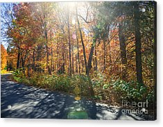 Sunflare In Fall Forest Acrylic Print