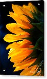Sunflower 2 Acrylic Print by Jacqueline Athmann