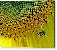 Sunflower And Beetle Acrylic Print