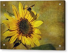 Sunflower And Bumble Bee Acrylic Print