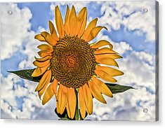00008 Sunflower And Clouds Acrylic Print