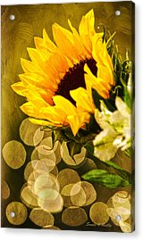 Sunflower And The Lights Acrylic Print by Sandi OReilly