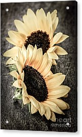 Sunflower Blossoms Acrylic Print by Elena Elisseeva