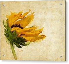 Sunflower Breezes Acrylic Print by Nikki Marie Smith