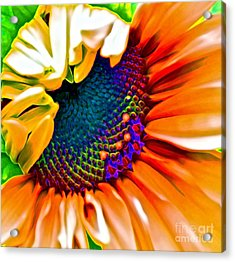 Sunflower Crazed Acrylic Print by Gwyn Newcombe