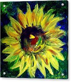 Sunflower  Acrylic Print by Cynthia Hudson
