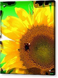 Acrylic Print featuring the digital art Sunflower by Daniel Janda