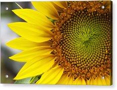 Sunflower Face Acrylic Print
