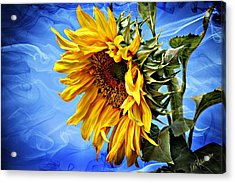 Acrylic Print featuring the photograph Sunflower Fantasy by Barbara Chichester