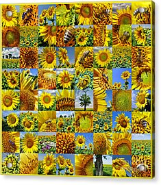 Sunflower Field Collage In Yellow Acrylic Print