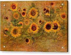 Sunflower Garden Acrylic Print