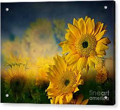 Sunflower Garden Acrylic Print by Shirley Mangini