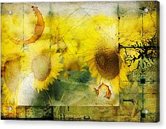 Acrylic Print featuring the photograph Sunflower Grunge by Kathy Churchman