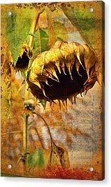 Sunflower Acrylic Print by Gynt