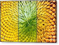 Sunflower Heart Triptych Acrylic Print by Lisa Knechtel