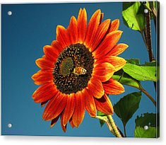 Acrylic Print featuring the photograph Sunflower Honey Bee by Joyce Dickens