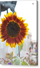 Sunflower In Balboa Park Acrylic Print by Misty Stach