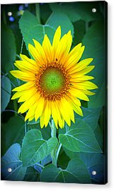 Sunflower In Green Acrylic Print
