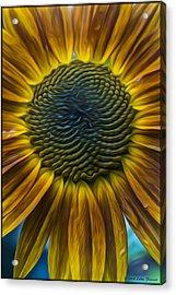 Sunflower In Rain Acrylic Print