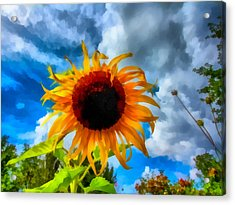 Sunflower Inspiration Acrylic Print