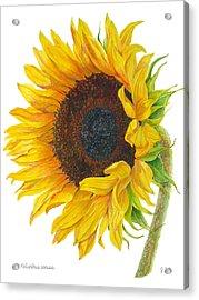 Sunflower - Helianthus Annuus Acrylic Print