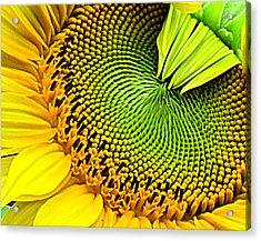 Sunflower Kaleidescope Acrylic Print