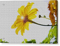 Acrylic Print featuring the photograph Sunflower by Kandy Hurley