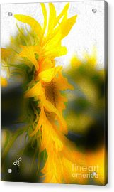 Sunflower Acrylic Print by Leo Symon