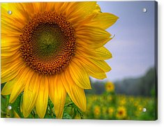 Acrylic Print featuring the photograph Sunflower by Michael Donahue