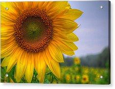 Sunflower Acrylic Print by Michael Donahue