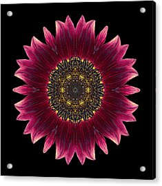 Sunflower Moulin Rouge I Flower Mandala Acrylic Print