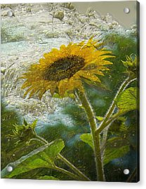 Sunflower Mountain Acrylic Print