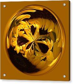 Sunflower Orb Acrylic Print by Paulette Thomas