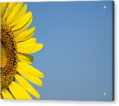 Sunflower Acrylic Print by Paige Sims