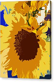 Sunflower Pop Acrylic Print by Colleen Kammerer