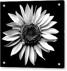 'sunflower Portrait' Acrylic Print