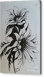 Acrylic Print featuring the drawing Sunflower by Rose Wang