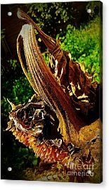 Sunflower Seedless 2 Acrylic Print by James Aiken