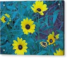 Sunflower Sisters Acrylic Print