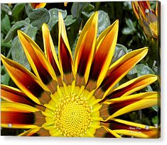 Sunflower Smiling Limited Edition Acrylic Print